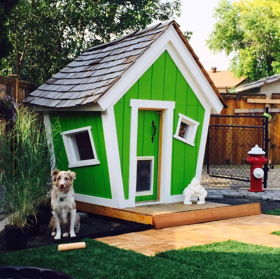 Картинки домов для собак